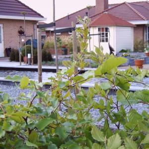 Steiger-vergroot-de-grote-tuin-20